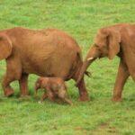 El trabajador fallecido estaba en el recinto de los elefantes del Parque de Cabárceno